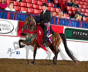 About Clanton Performance Horses